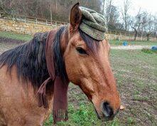 4 Gründe, warum die Beziehung zu deinem Pferd bislang gescheitert ist und du endlich verstehst wie dein Pferd denkt